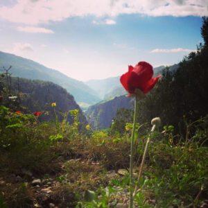 Lebanon Reforestation
