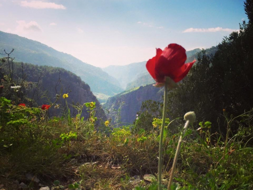 Lebanon-Reforestation-Beauty-Shot-of-River-of-Abraham-Valley